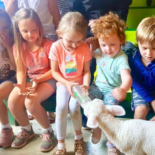 Children feeding a greedy lamb