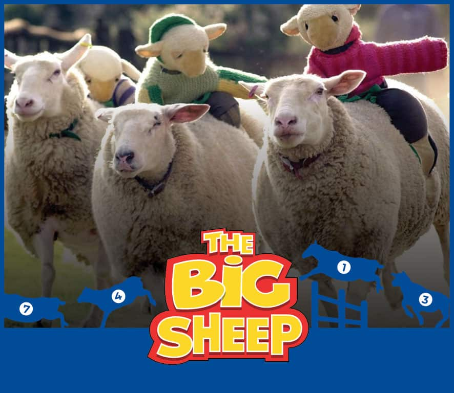 Sheep races, live performances and events