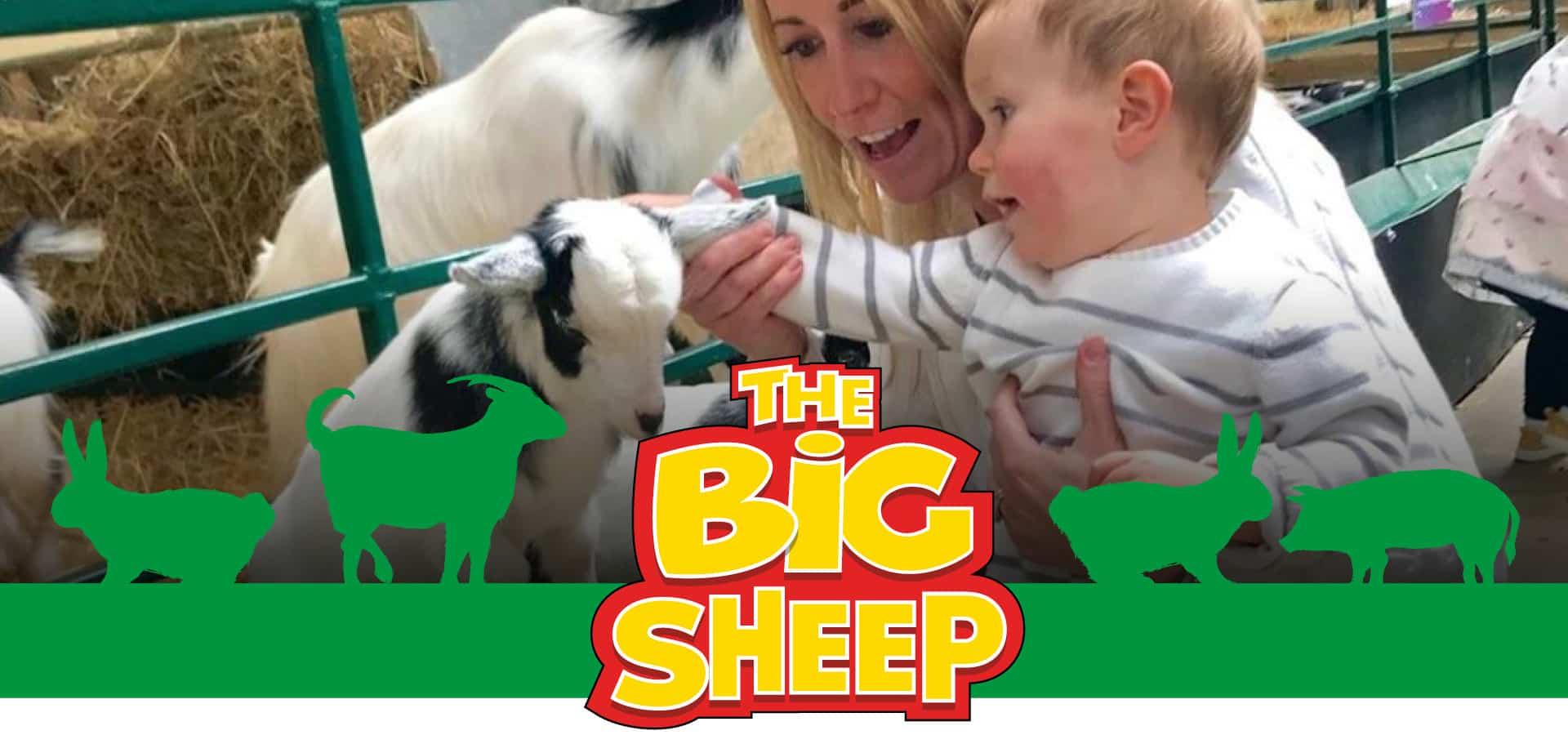 The Big Sheep Meet The Animals