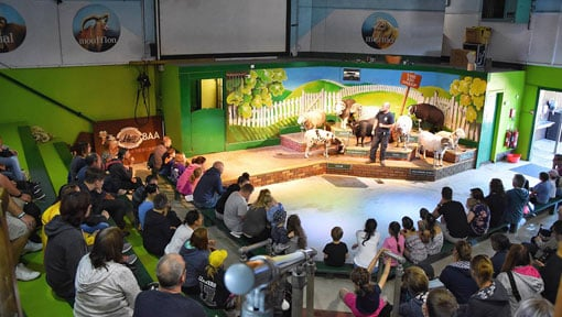 The Big Sheep indoor show area with audience