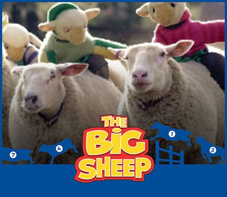 Sheep at The Big Sheep live shows