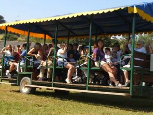 Big Sheep Tractor Safari