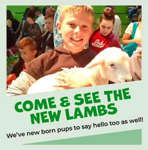 Come and see the new Lambs at The Big Sheep
