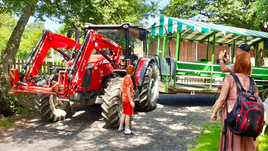 Tractor Safari - The Big Sheep